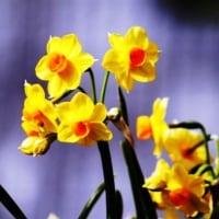 春を待ちわびる・・・ 【ひで某】