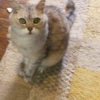 猫のレオ君、久しぶり