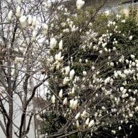 団地内の春を求めて
