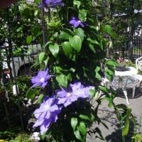 70種300本以上の植物が活き活きと生活する光庭の近況(Blog571)