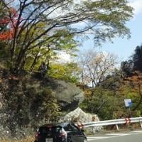 いろは坂下りの紅葉の景色!イン日光2  11/5誕生花・ペンタス