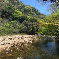 山歩き三昧の日本:新緑薫る神戸