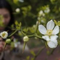 薬用植物園の植物内容