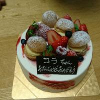 コラちゃん、9歳のお誕生日おめでとう!