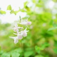 春を彩る野草(赤塚植物園2017年4月22日撮影)