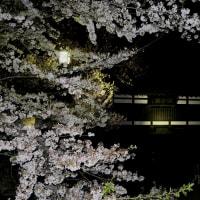 咋宵古城で  ~懐古園桜満開~
