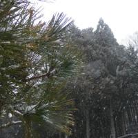 平成29年1月22日・12時前の天候は雪が降る日となっています!