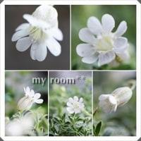 可愛い、、花たち、、。