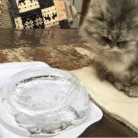 猫部屋の水が凍っちゃった💦
