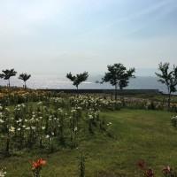 舞洲ゆり園