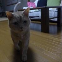 ネコの食欲