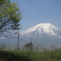 富士山へワラビ採りに行く