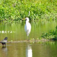 何か月ぶり ?かの鳥撮り・・・