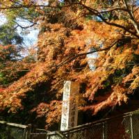 鶴見岳 納会登山(H28.12.17~18)