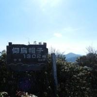 仰烏帽子岳 満開のフクジュソウ(H29.3.4)