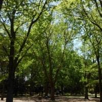 昼散歩 市民の森