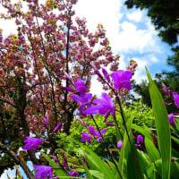 『花散歩』 紫蘭