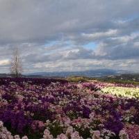 花散歩のあと、現地講座で『あわじ花さじき』へ行きました。