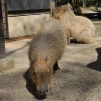 ☆幸せそうな風くんとメイちゃん〜三島市立公園楽寿園〜