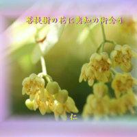 フォト575qt1305『 菩提樹の花に恋知の術念う 』