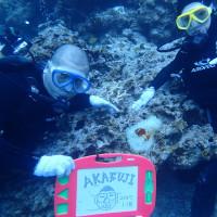 水納島体験ダイビングおまけ付き