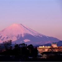 18/Jan 朝焼けの富士山とカンムリカイツブリとハクセキレイとカモメ