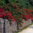 石垣とブーゲンビリア☆竹富島・八重山諸島