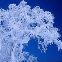 樹氷を求めて…