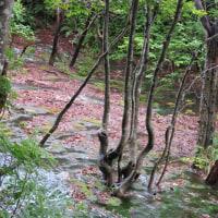 湧水と原生林の獅子ヶ鼻湿原