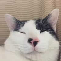 くーさん、ブスな顔で眠る