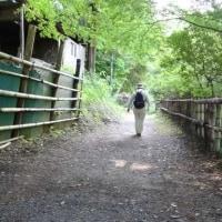 散歩(養老渓谷)