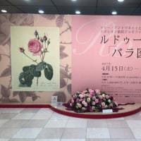 ルドゥーテの「バラ図譜」展 at そごう美術館