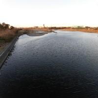 黒く見える多摩川の水