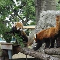 日本丸から動物園へ
