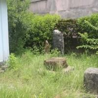 綾道平良北コース巡り 4. ⑤ & ⑥