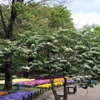 春の相模原公園の様子 その1