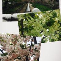 まだ桜が咲いてるo(^_^)o