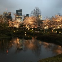 六本木の桜、ライトアップ