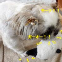平成29年度6月11日猪名寺童謡コーラス兵庫県合唱祭に参加