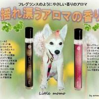 フレグランスのようにやさしい香りのアロマ 【magico】アロマの香りでリフレッシュ!!