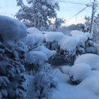 ついに雪にうずまる