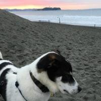 海と犬はベストマッチ
