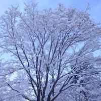 雪の小径。