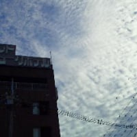 翌日10日朝の彦根の空には綺麗な鱗雲が~その後、朝食の後、駅前を散歩~彦根市立図書館創設100周年記念式典