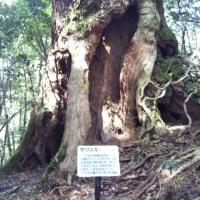 無料マイルを使って屋久島への旅 4日目