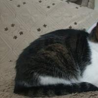ボーイソプラノ&先生と迷い猫/DVD