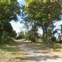 耕作放棄地からバラ園へ 2016.10.24-2