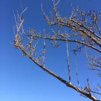 真っ青な空に茜色が綺麗だ
