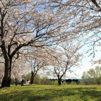 桜堤のお花見(磐西C57)