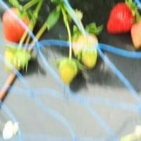 農ボラ(草取など)